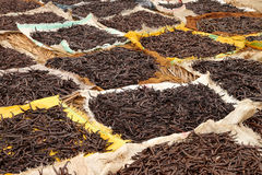 Drying vanilla Royalty Free Stock Photo