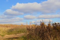 Drying yellow grass and field with a cloudy sky. Autumn relaxing landscape.  stock photos