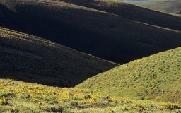 Dryland Hills in Spring. Flower covered hills in the dryland portion of Washington on a spring morning Stock Images