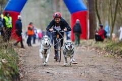 Dryland sled dog races Royalty Free Stock Photos