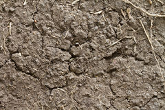 Dryland or wasteland soil Stock Photography