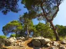dryluje drzewa Zdjęcie Stock