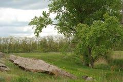 dryluje drzewa obrazy royalty free
