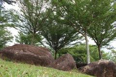dryluje drzewa Fotografia Stock