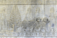 Dryluje rzeźbić ulgi antyczny ruiny miasto Persepolis Iran Zdjęcia Royalty Free
