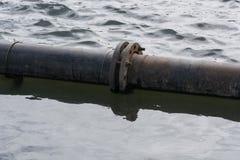 Drymby na wodzie Zdjęcie Stock