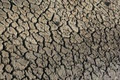 dryness Royaltyfri Fotografi