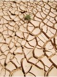 dryness arkivbilder