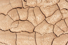 Dryness in the desert Stock Photography