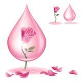 Drypa av rosolja vektor illustrationer