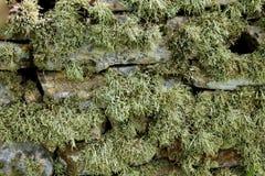 Drystone ściana zakrywająca w liszaju Fotografia Stock