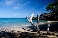 Drywood, shadows and surf of Beach 69 Royalty Free Stock Photos