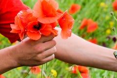 Drzeć maczki dla bukieta Maczek kwitnie w polanie Kwitnący czerwony dziki maczek makową czerwone kwiaty Zdjęcia Royalty Free