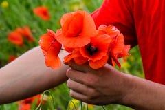 Drzeć maczki dla bukieta Maczek kwitnie w polanie Kwitnący czerwony dziki maczek makową czerwone kwiaty Zdjęcia Stock