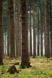 drzew drewna Obrazy Royalty Free