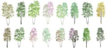 16 drzew na białym tle ilustracji
