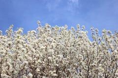 Drzew nieb Odgórny krajobraz Obraz Stock