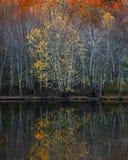 Drzew odbić jesień Zdjęcie Stock