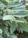 Drzew piórka Zdjęcia Stock