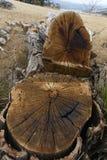 drzewa ścięte Zdjęcia Royalty Free