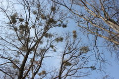 Drzewa ściskają niebo z Zdjęcie Stock