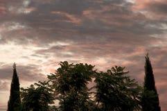 Drzewa światło Obrazy Stock