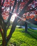 Drzewa światło Zdjęcia Royalty Free