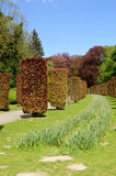 drzewa żyłujący Zdjęcie Stock