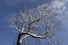drzewa 02 zima Fotografia Royalty Free
