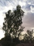 Drzewa Zdjęcie Stock