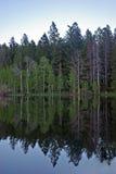 drzewa Fotografia Royalty Free