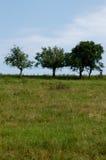 - drzewa obrazy stock
