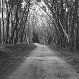 Drzewa Zdjęcia Stock
