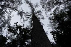 Drzewa Obraz Stock