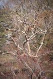 Drzewa Obrazy Royalty Free