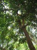 Drzewa obrazy stock