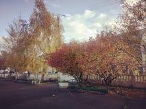 Drzewa ładni fotografia royalty free