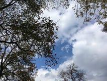 Drzewa, błękitny chmurny niebo wczesny jesień las Fotografia Stock