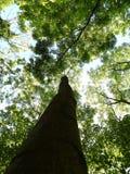 Drzewa below Zdjęcie Stock