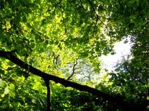 Drzewa below Fotografia Stock