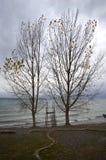 Drzewa blisko jeziora Obraz Stock