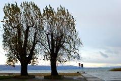 Drzewa blisko jeziora Zdjęcie Royalty Free