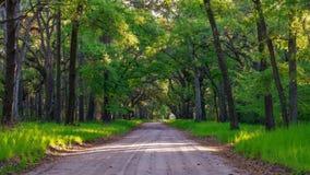 Drzewa botaniki zatoka Obrazy Royalty Free