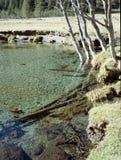drzewa brzegu rzeki Zdjęcie Royalty Free