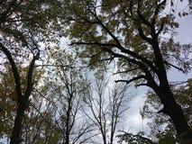 Drzewa, chmurny niebo wczesny jesień las Zdjęcia Royalty Free