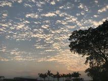 Drzewa, chmury i gradientowy błękit pomarańczowy niebo przy zmierzchem, Obrazy Stock