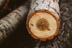 Drzewa cięcia puszek Zdjęcie Royalty Free