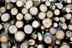 Drzewa cięcie Obrazy Royalty Free