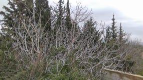 Drzewa ciernie zdjęcie royalty free