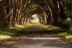 drzewa cyprysowego tunelu. Obraz Royalty Free
